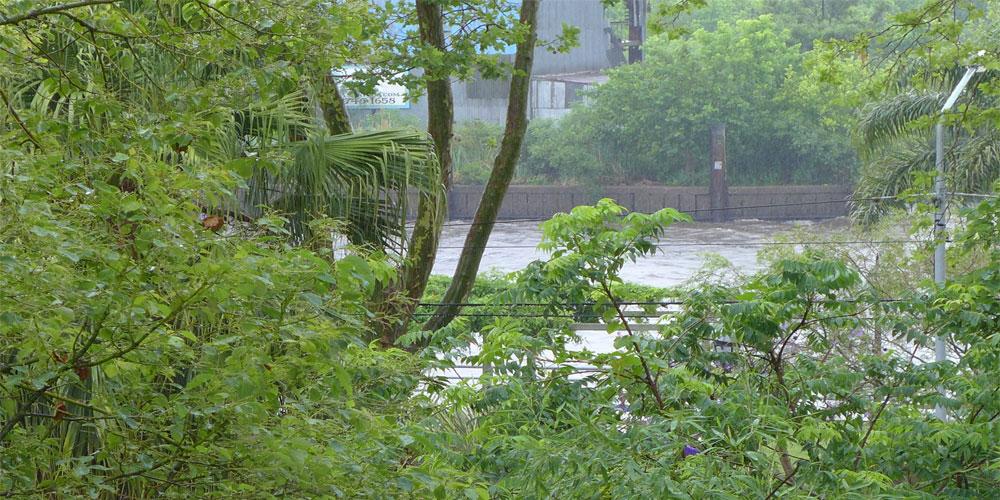 Tigre-verde-y-agua