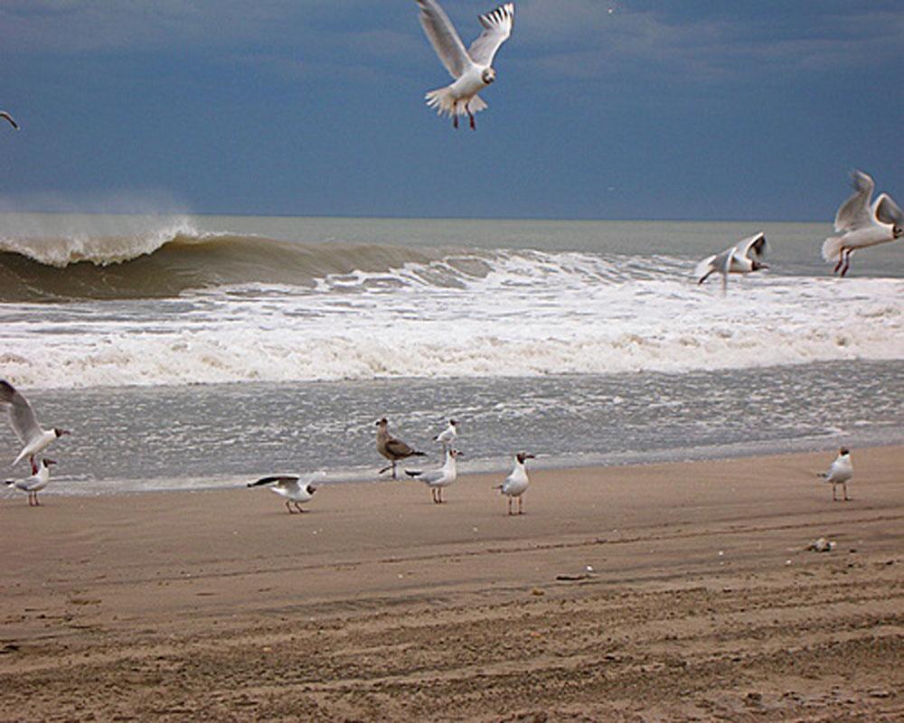 Gaviotas-en-la-playa